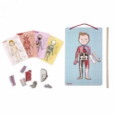 Игровой магнитный набор Janod Тело человека J05491